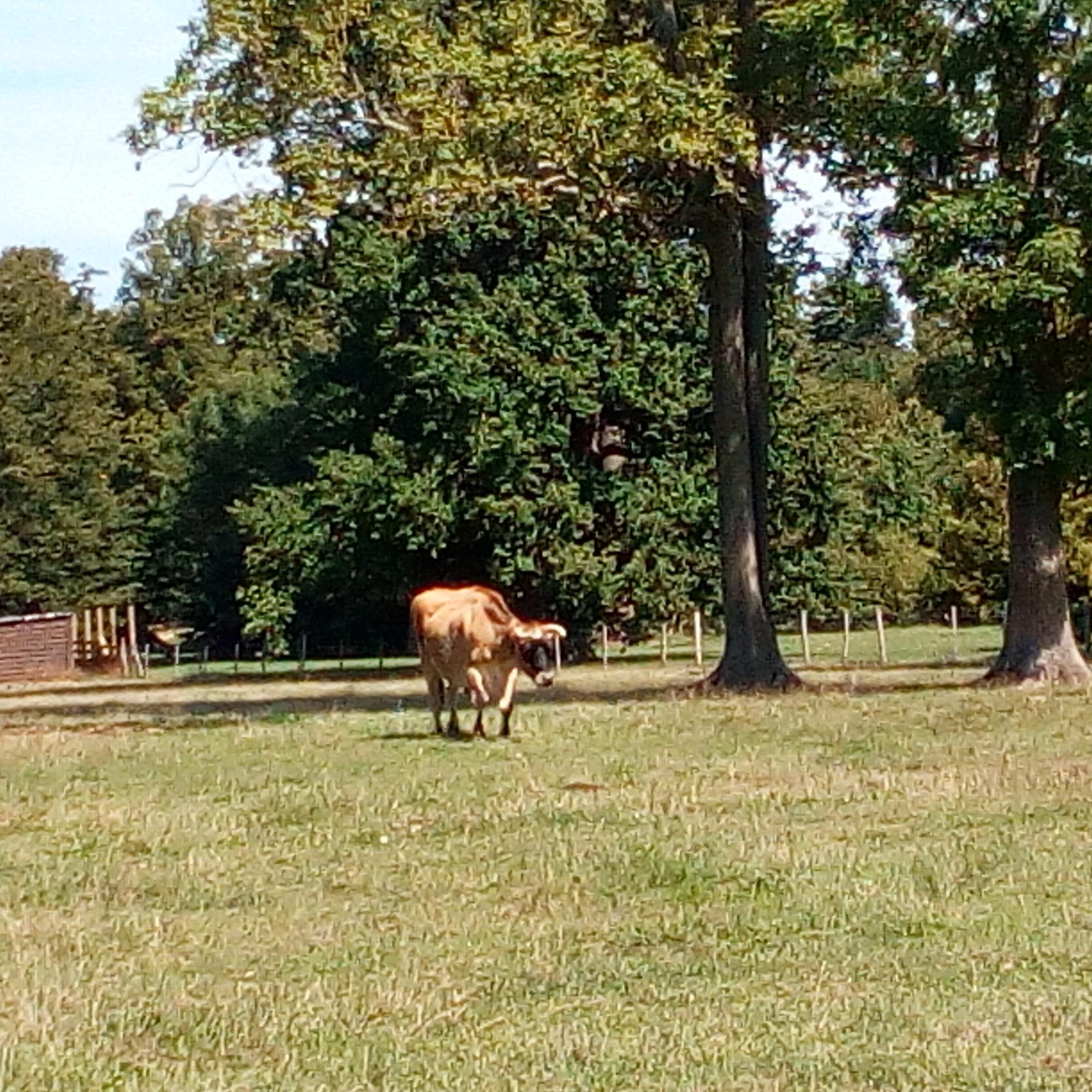 Le Hameau de la Reine, la ferme